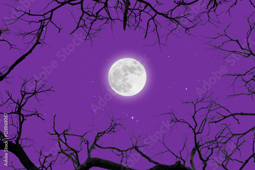 Foto op Aluminium Snoeien dead branches with fullmoon and star.winter.