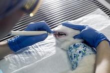 Cat Test On Animal Hospital