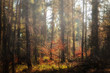 Misty autumn forest landscape with colorful fallen leaves. (harmony, relaxation - concept)