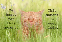 Be Happy For This Moment. This Moment Is Your Life - An Inspirational Quote With An Image Of A Happy Orange Cat In Green Grass