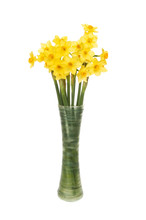 Miniature Daffodil Flowers In A Vase