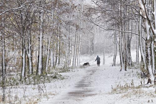 Aluminium Prints Bison Walk in park. Snowfall.
