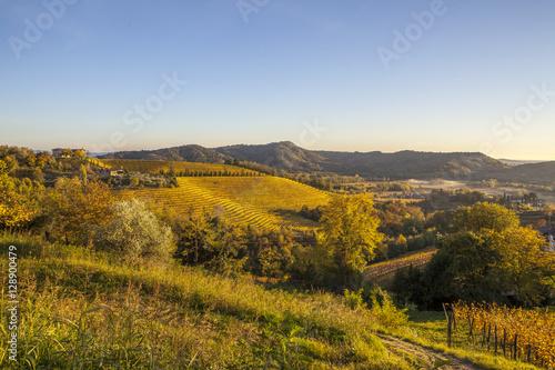 Papiers peints Vignoble Vineyard in autumn in Collio region, Italy