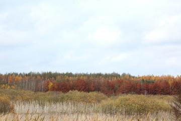 Panel Szklany Wiejski Jesień na polach