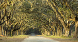 Fototapeta Sawanna - Dramatic avenue of oaks in Savannah, Georgia