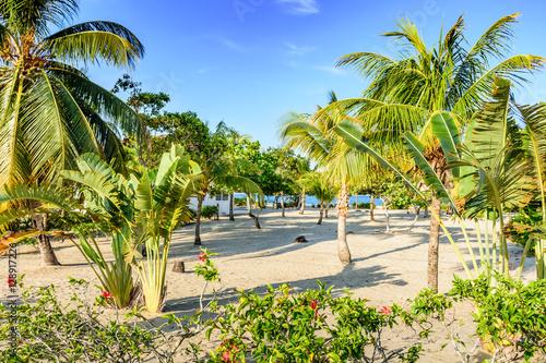 Montage in der Fensternische Karibik Coconut palms & banana trees on Caribbean beach