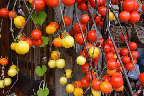 ogrod-w-japonskim-stylu-pelen-pomidorow