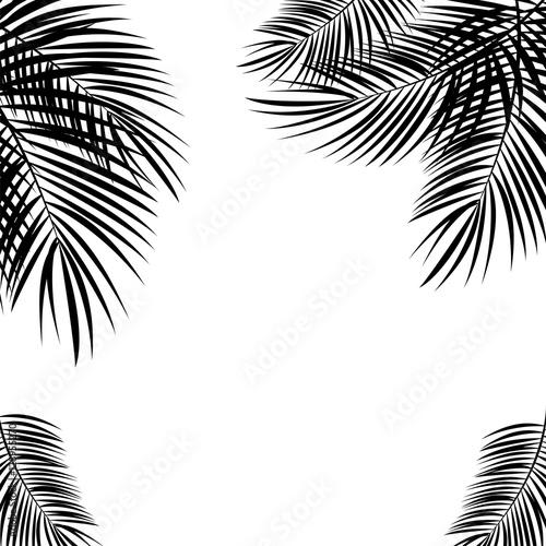 Fotografia Black Palm Leaf on White Background. Vector Illustration.