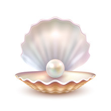Pearl Shell Realistic Close Up...