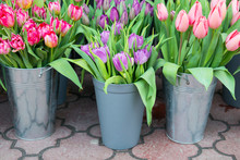 Tulips In The Buckets
