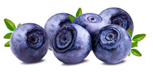 Bilberry Blueberries Isolated ...