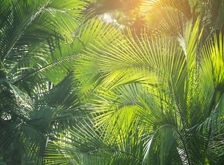 Panel Szklany Podświetlane Do biura green palm leaf