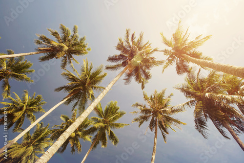 Fotobehang Aan het plafond Coconut Palm trees in tropic paradise sky. Summer beach Vacation background, freedom, tropical travel