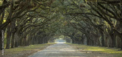 Deurstickers Khaki Avenue of oaks in American South