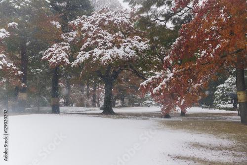 初雪に彩られた東京の紅葉 その1