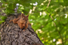 The Funny Squirrel On The Tree.