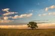 Pampas Landscape, La Pampa, Argentina