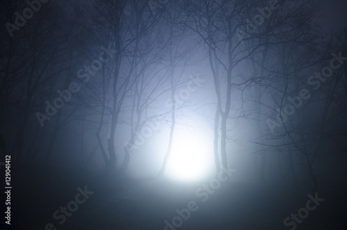 Zdjęcie XXL Potężne światło w lesie