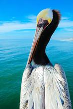 Pelian Profile