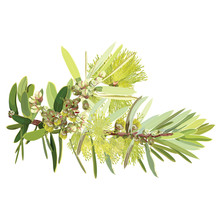 Yellow Flowering Bottle Tree Realistic Vector