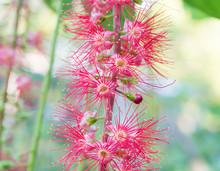 Kradon Flower