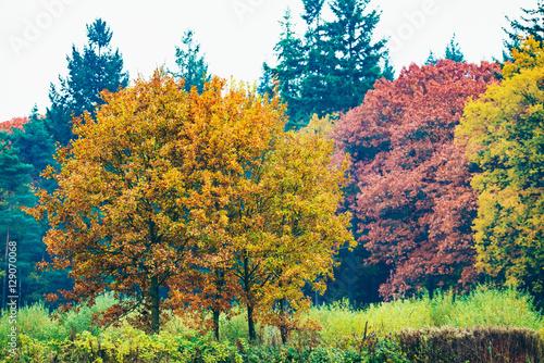 Autumn trees in field. Amspen. Achterhoek. Gelderland. The Nethe Canvas-taulu