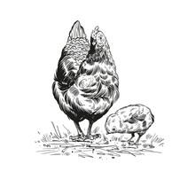 Hand Drawn Rooster Sketch Elem...
