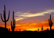 Wild West Sunset With Cactus S...