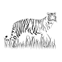 Black Tiger In A Grass On A White Background