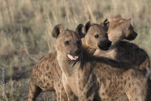 Foto op Aluminium Hyena Portrait of wild free african spotted hyena