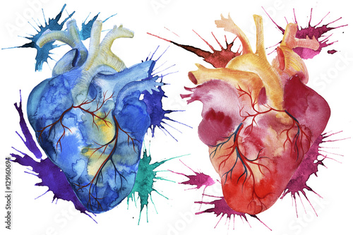 Fototapeta Hand painted watercolor anatomical hearts.