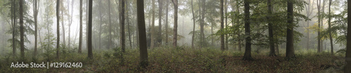 Staande foto Bleke violet Panorama landscape image of Wendover Woods on foggy Autumn Morni