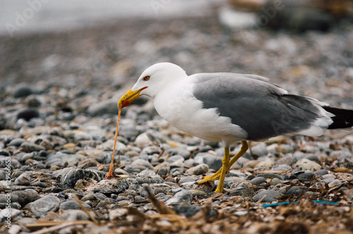 Staande foto Vogel Ocean bird catching fish