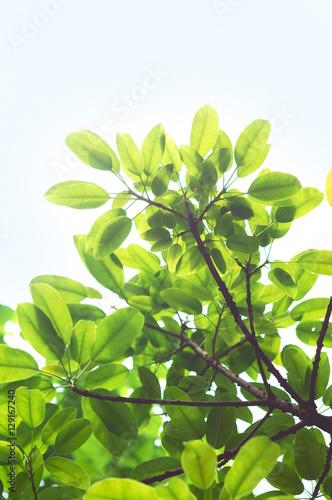 Garden Poster Plant Tree Leaves