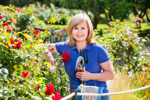 Papiers peints Pansies Woman gardening red roses and holding horticultural tools on sun