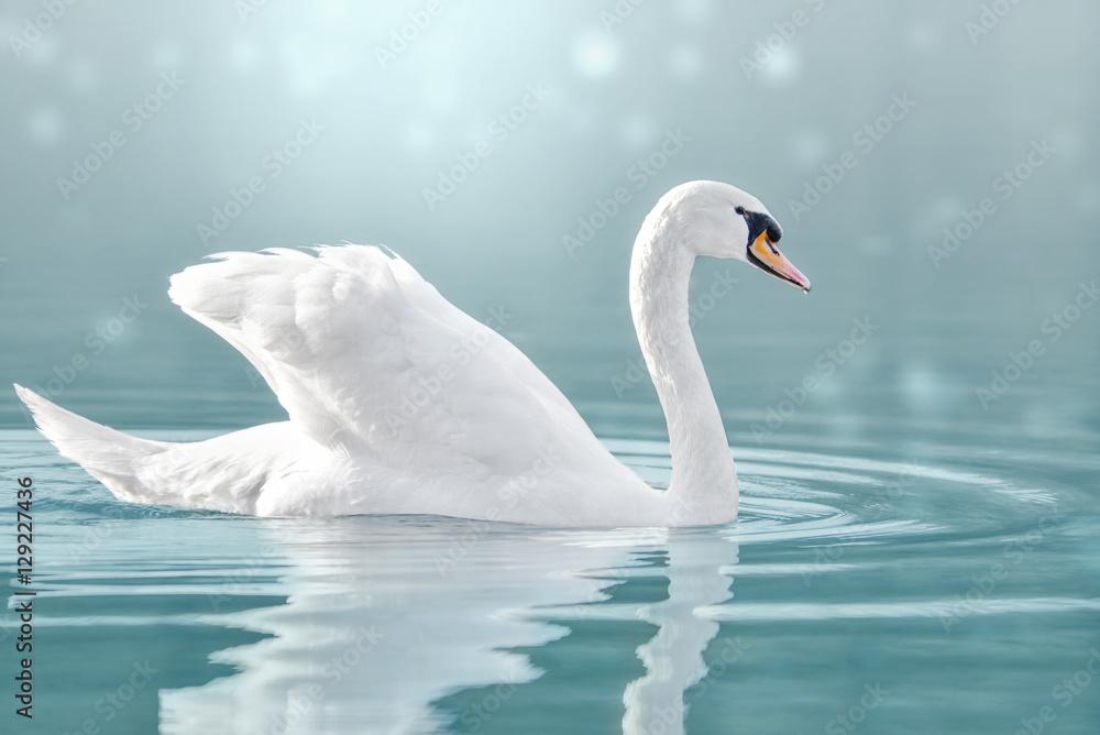 Höckerschwan auf dem See