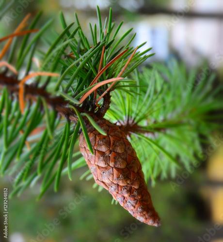 Fototapeta Christmas pine tree background obraz na płótnie