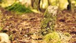 Forest floor with tree stump and moss -Slider