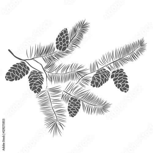Hand drawn pine tree branch Fototapet