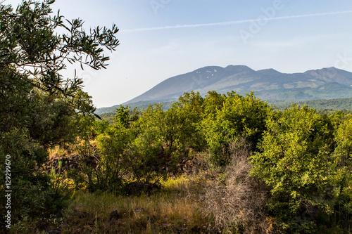 Fotografie, Obraz  Terrazze di ulivi sull'Etna