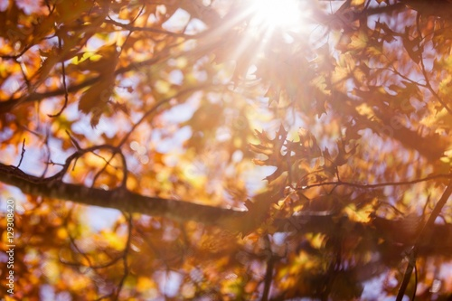 Photo  Autumn trees during sunny day