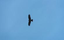 Black Hawk On Blue Sky
