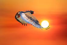 Bateleur Eagle - African Wild ...