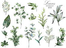 Big Set Watercolor Elements - Herbs, Leaf. Collection Garden And Wild Herb, Leaves, Branches, Illustration Isolated On White Background, Eucalyptus, Exotic, Tropical Leaf. Green