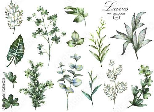duzy-zestaw-elementow-akwarela-ziola-lisc-kolekcja-ogrod-i-dziki-ziele
