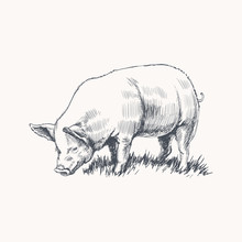 Hand Drawn Sketch Pig Vector I...