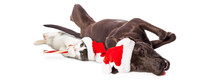 Christmas Dogs And Cat Lying Together Banner