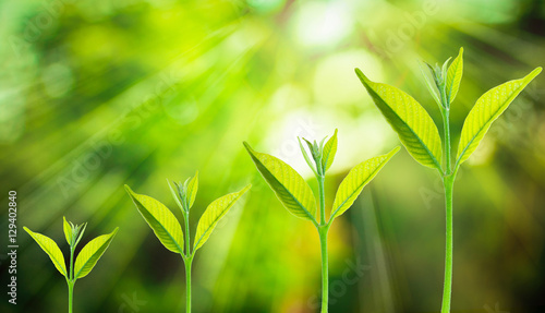 Small tree growing on the blurred fresh green nature background with bokeh of sunlight, Growth of business concepts Fototapete