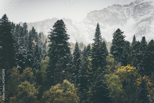 Fotografie, Obraz  Coniferous Forest Landscape mountains on background Travel serene scenery moody