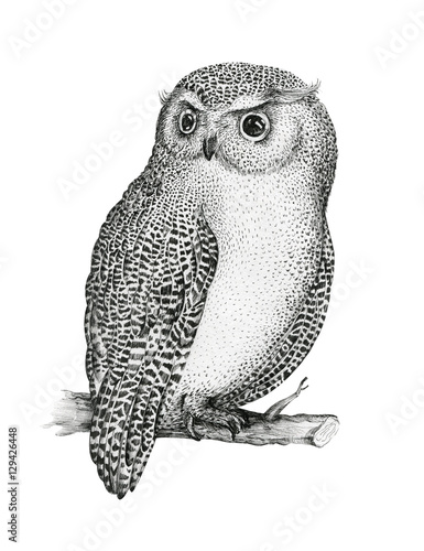 Poster Uilen cartoon Hand drawn isolated black white illustration owl fly bird. Trib